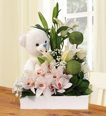 Orchids & Teddy